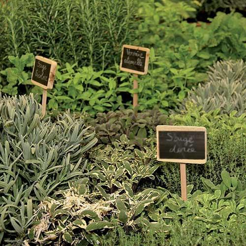 les herbes aromatiques bio en cuisine toulouse. Black Bedroom Furniture Sets. Home Design Ideas